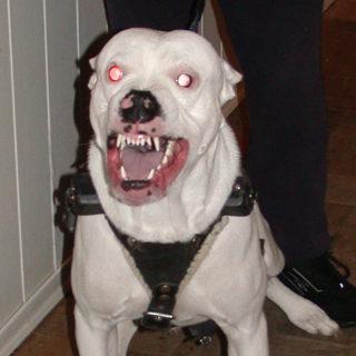 собака лает у двери