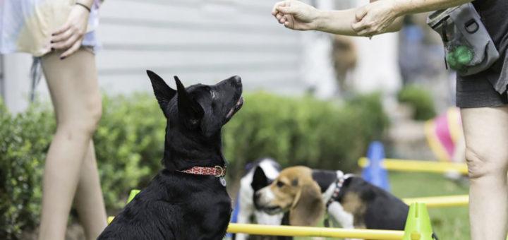 Собака на тренировке