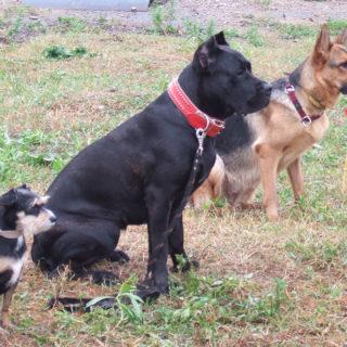 Собаки сидят на выдержке