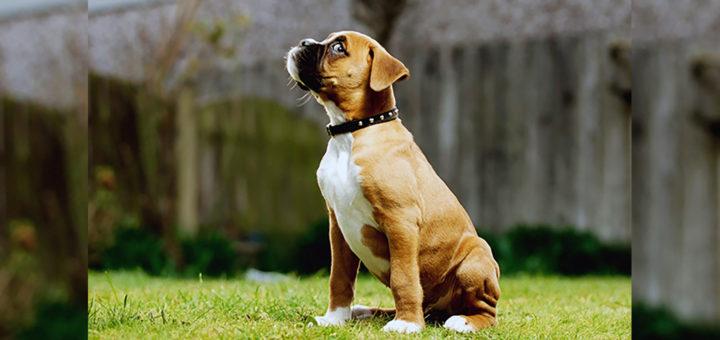 собака на площадке