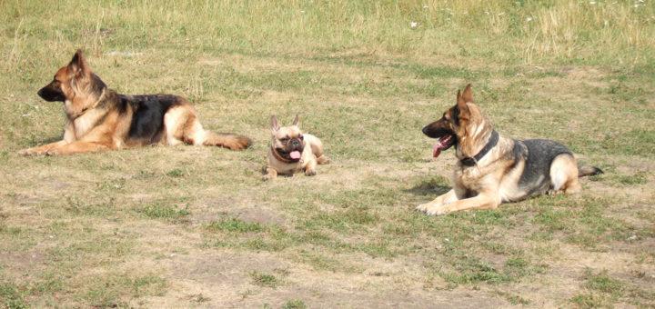 нападение собаки
