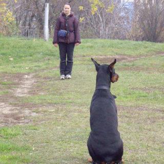 тренировка собак