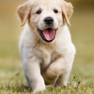 рефлекс у щенка