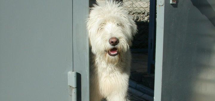 Охрана дома: собака у ворот