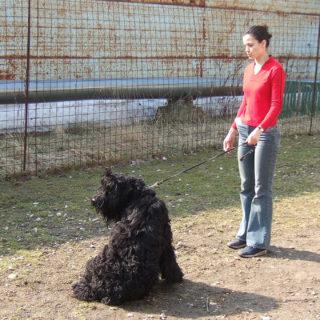 самостоятельная дрессировка собаки