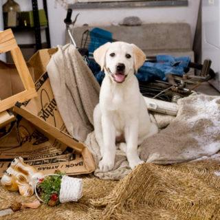 собака грызет мебель