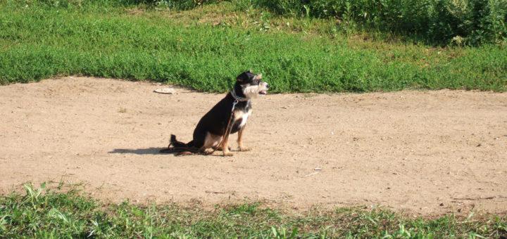 ошибки при тренировке собак