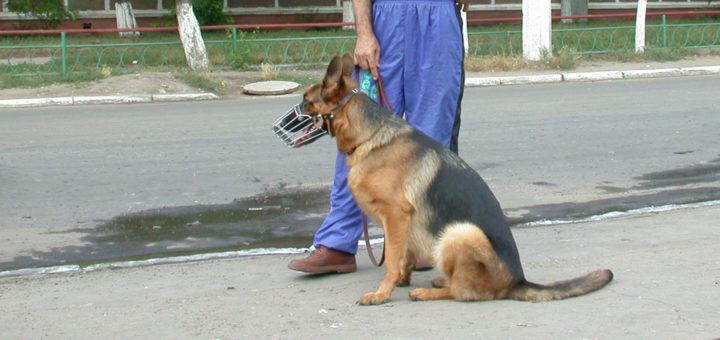 собака бросается на прохожих