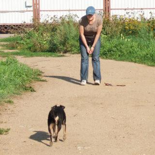 Прогулка с собакой: подзыв