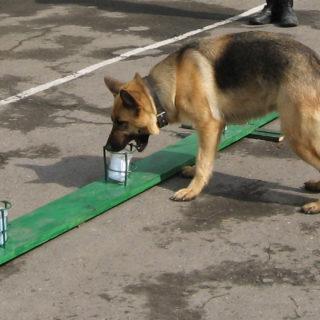собака нашла наркотики