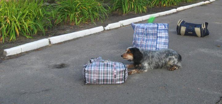 наркотики работа собаки