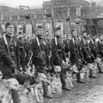 собаки Великой Отечественной войны