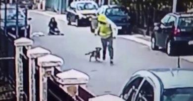 Бродячая собака атаковала грабителя