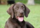 Понятие «охотничья собака» впервые определено законом