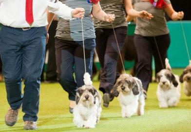 Crufts Dog Show 2018 идет в Бирмингеме