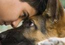 Собаки понимают эмоции человека