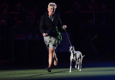 Crufts Dog Show 2018: уиппет против зоозащитников