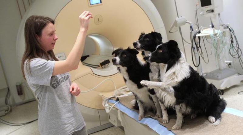 мозг собаки и томограф