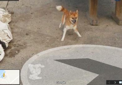 Собака погналась за «гуглокаром» и стала знаменитой