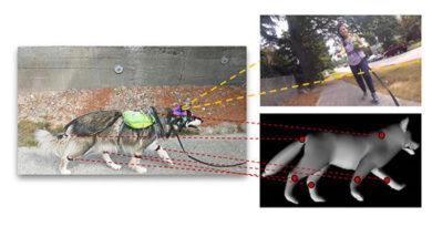 Поведение собак научился предсказывать компьютер