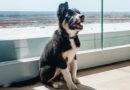 Симферопольский аэропорт обзавелся живым талисманом