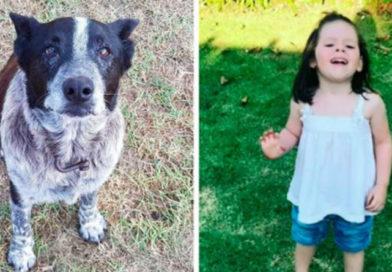 Старый глухой полуслепой пес спас ребенка