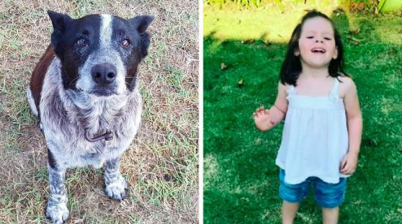 Старый пес Макс спас ребенка