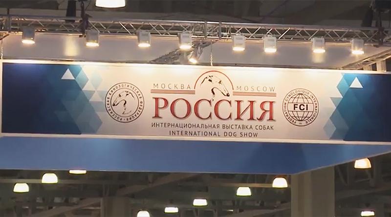 """выставка собак """"Россия-2018"""""""
