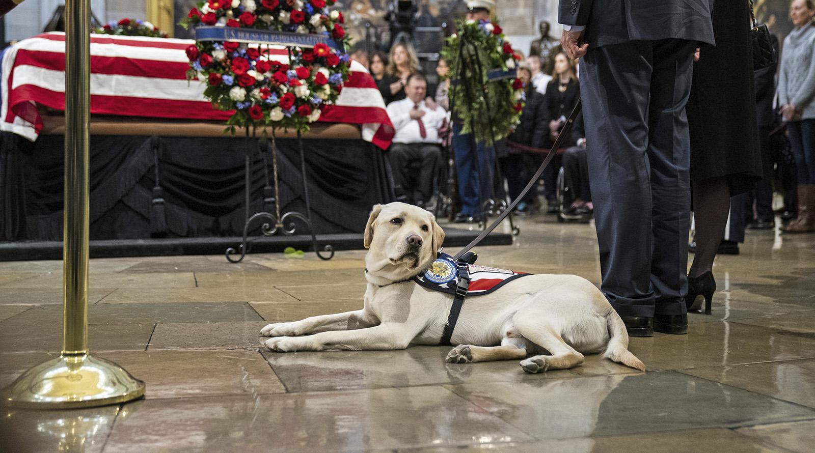 Собака президента Буша
