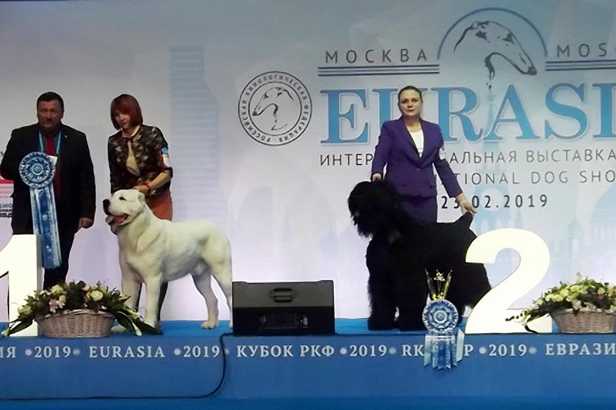 Евразия 2019