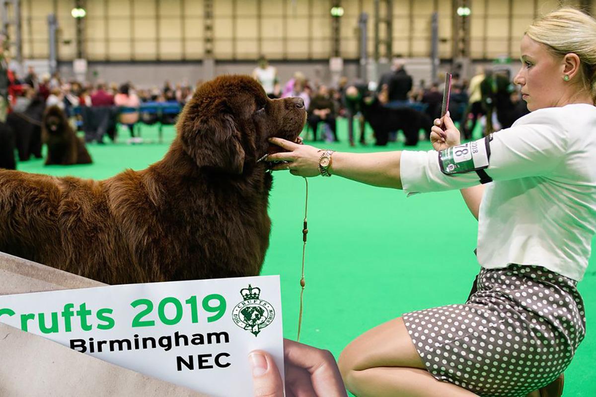 Бирмингем, выставка собак