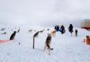 Сообщение о голодающих собаках «Берингии» проверено