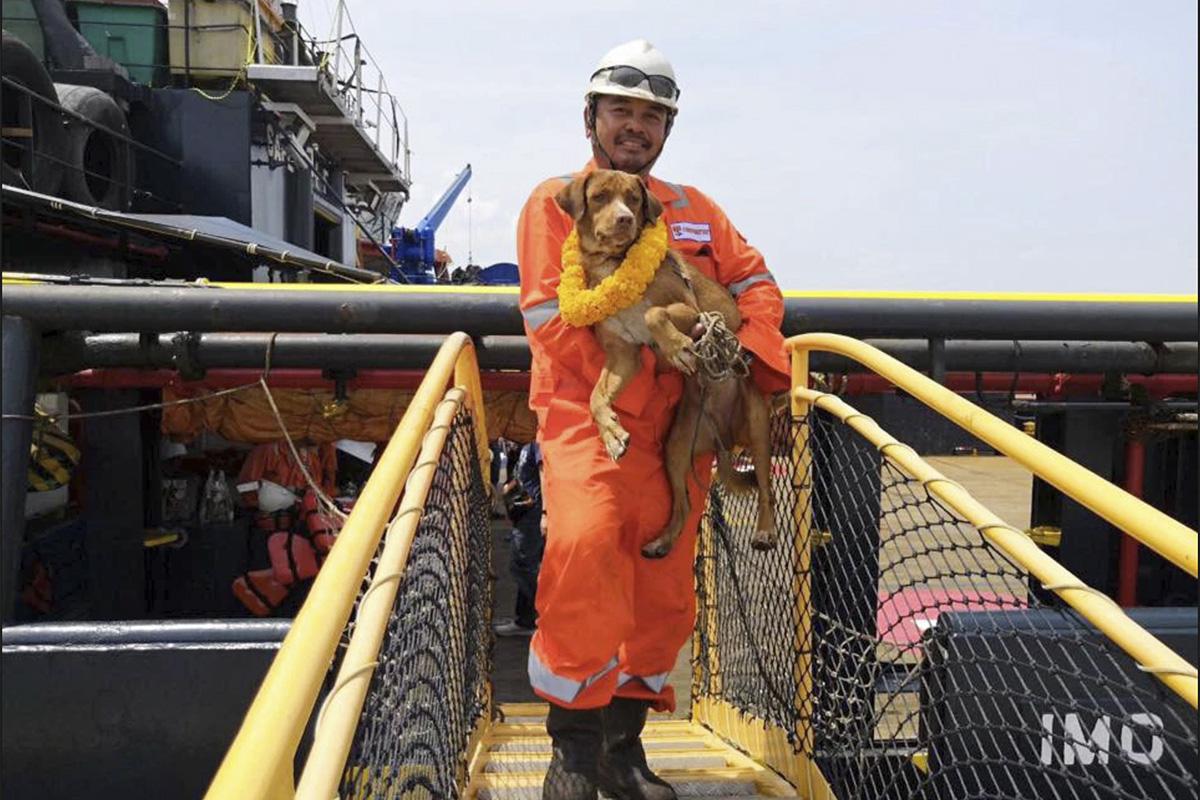 в открытом море найдена собака