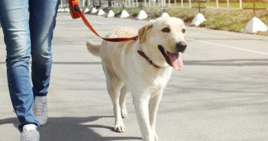 Собаководы отличаются активным образом жизни