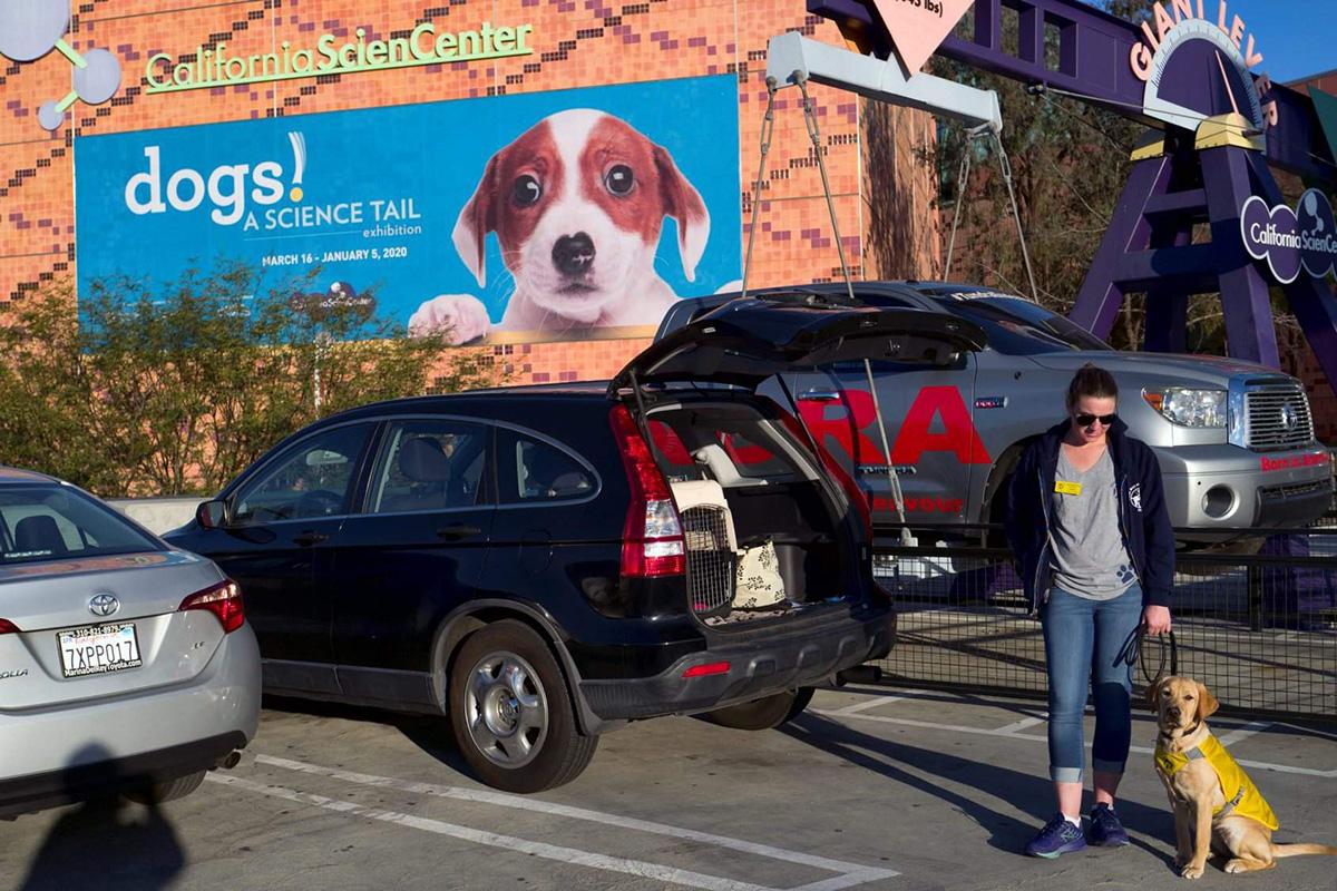 Лос-Анджелес: выставка о собаках