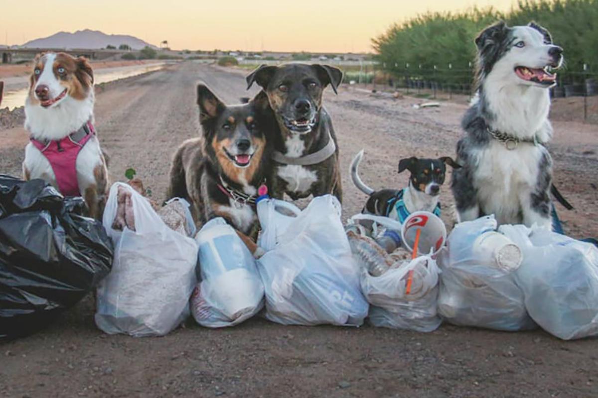 собака собирает пластиковый мусор