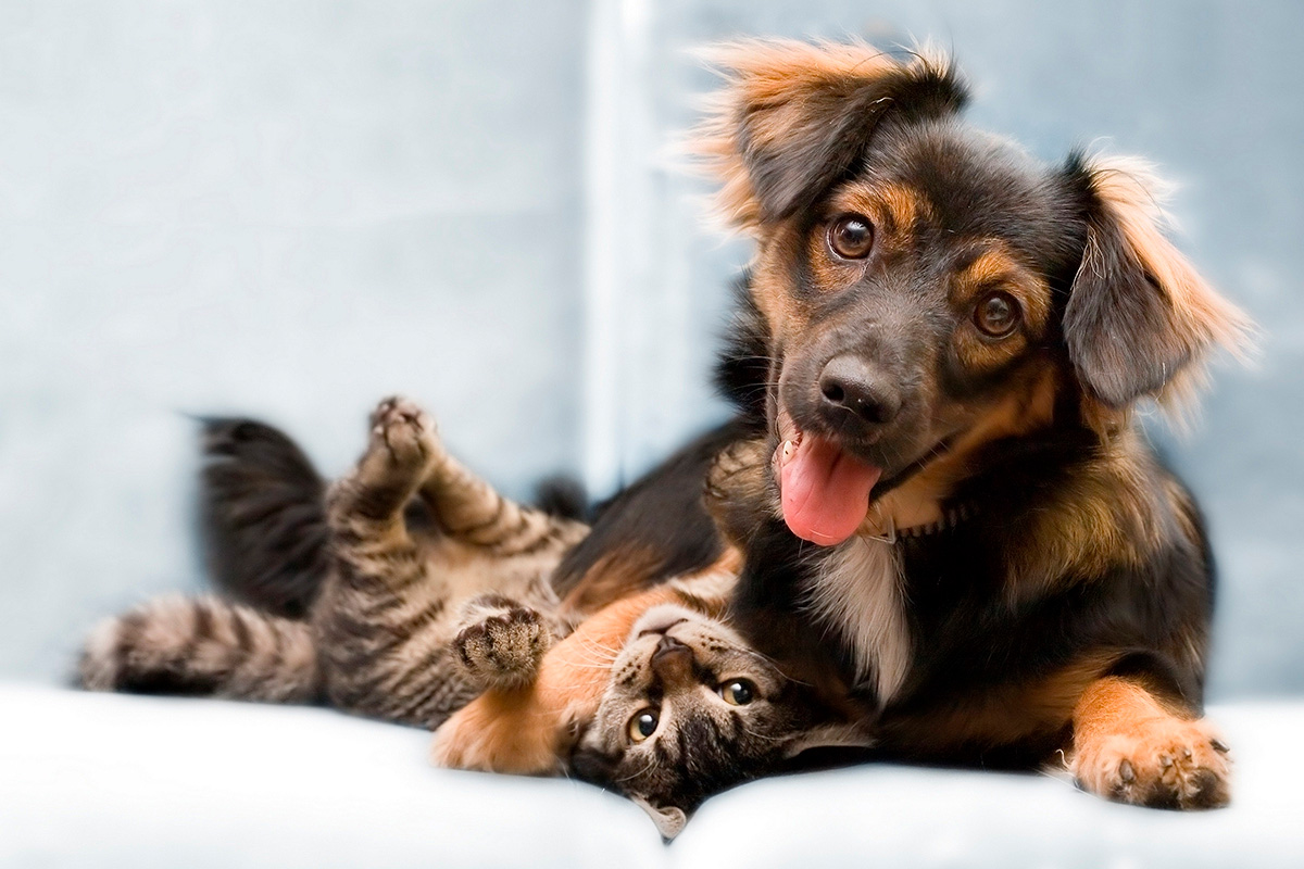владелец собаки и кошки - кто счастливее