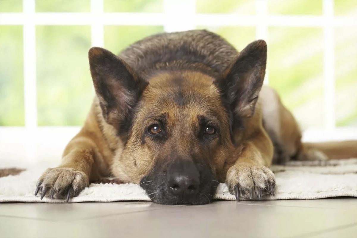 взгляд собаки: мимика