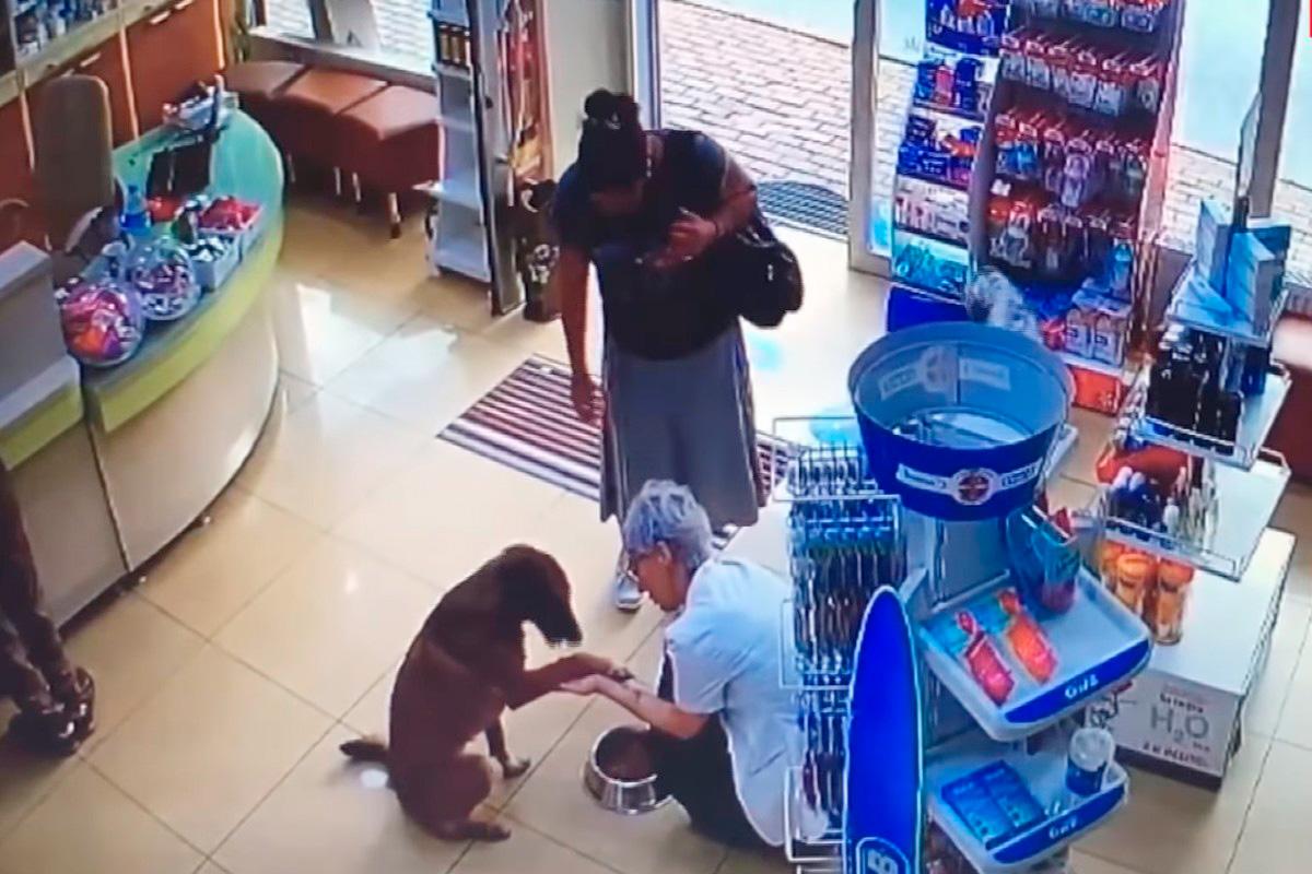Собака пришла в аптеку