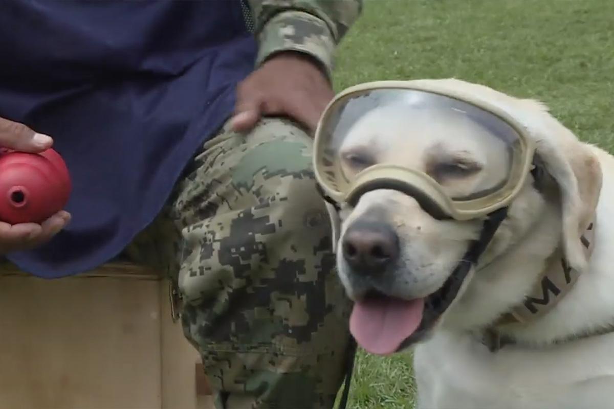 собака-спасатель Фрида