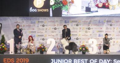 Подведены итоги участия россиян в Euro Dog Show 2019