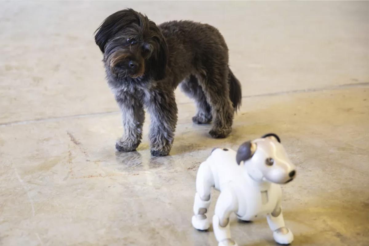 собака робот и собака