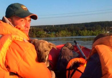 В Тулуне спасли сотню собак