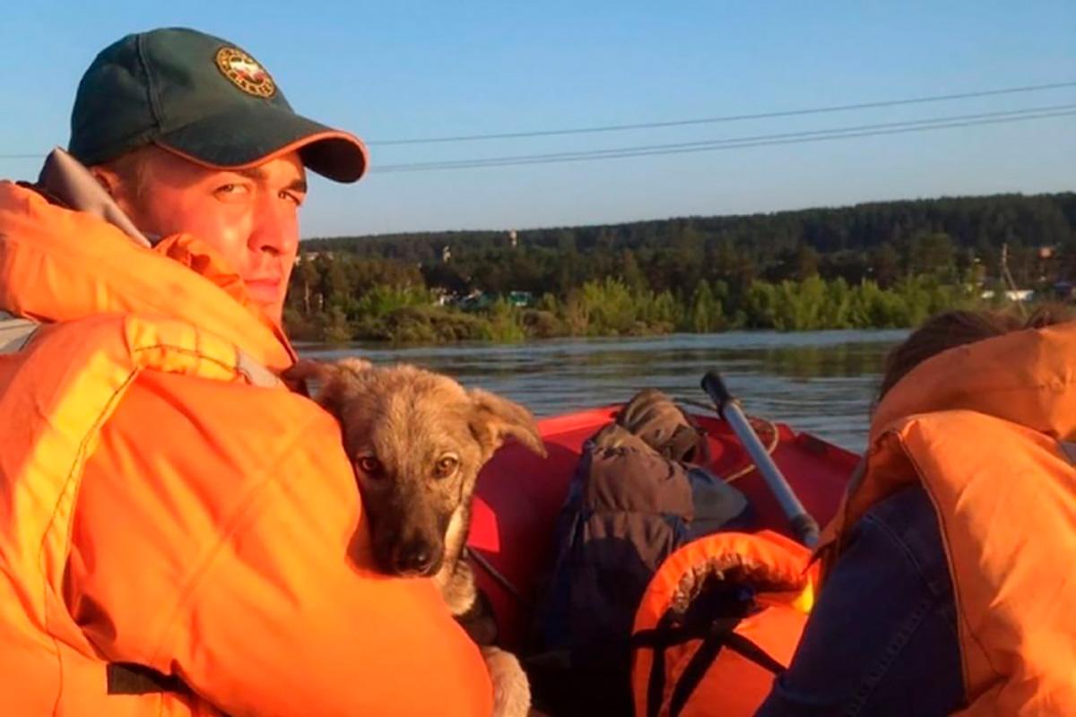 Тулун: спасатель и собака