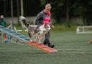 В Твери прошли соревнования по аджилити