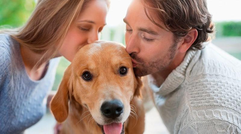 Собак целуют чаще, чем близких людей