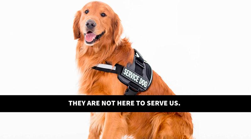 Рабочих собак требуют запретить