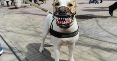 Придуман новый штраф для собаководов