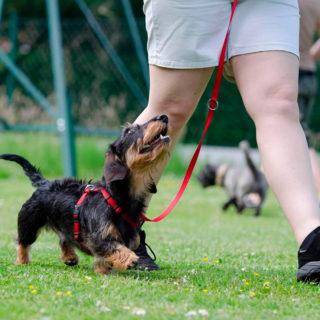 диабет - поможет собака