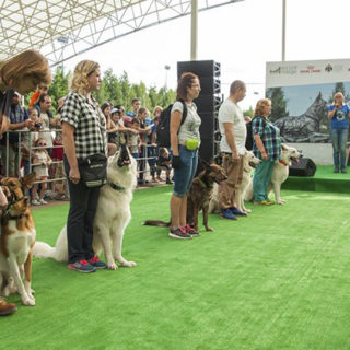 сколько собак в России: точные данные